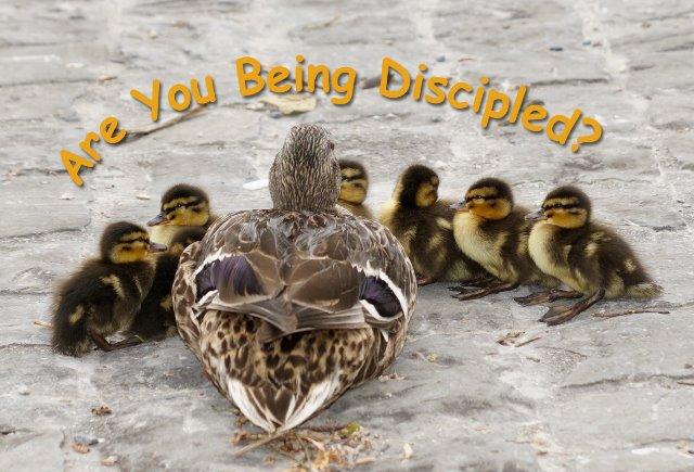 Are You Being Discipled?